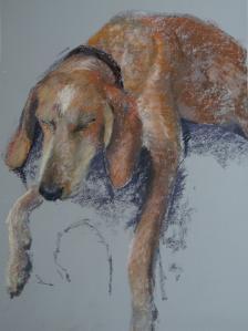 2014 06 chien
