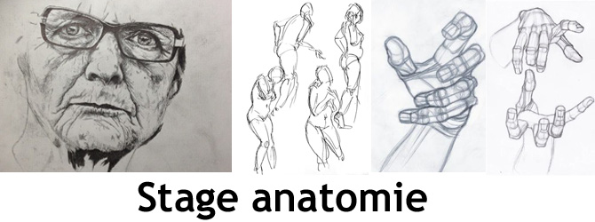 Entete stage anatomie